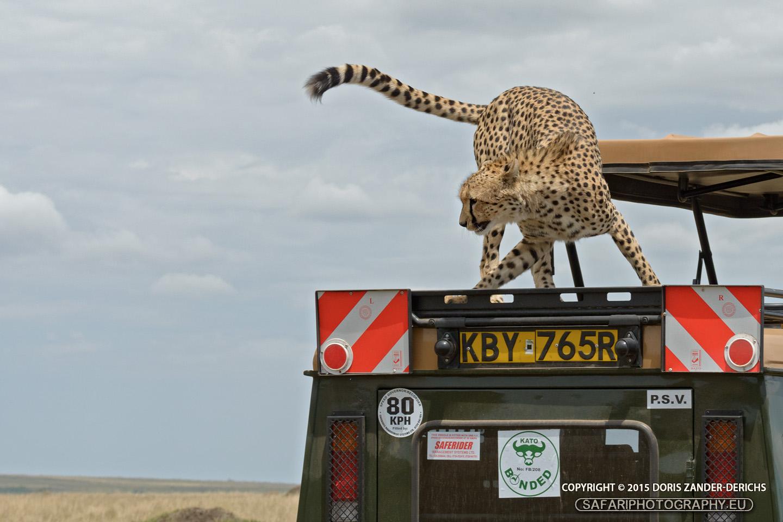 Gepard - Masai Mara - Jeep