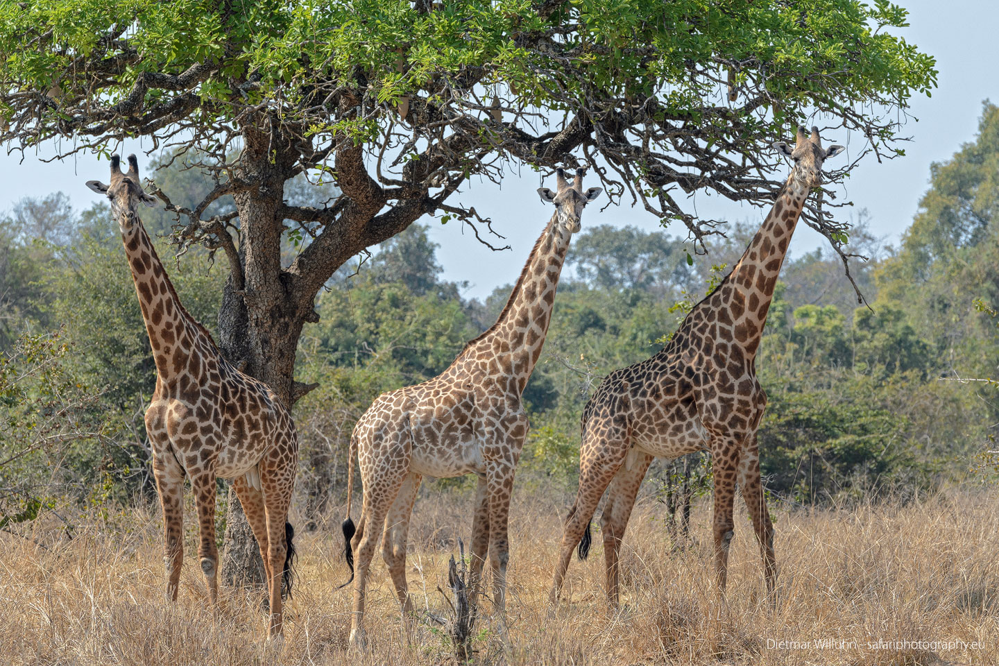 Walking Safari - Sambia