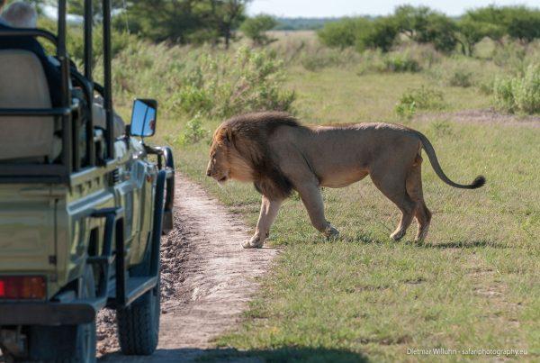 Safari-Szene