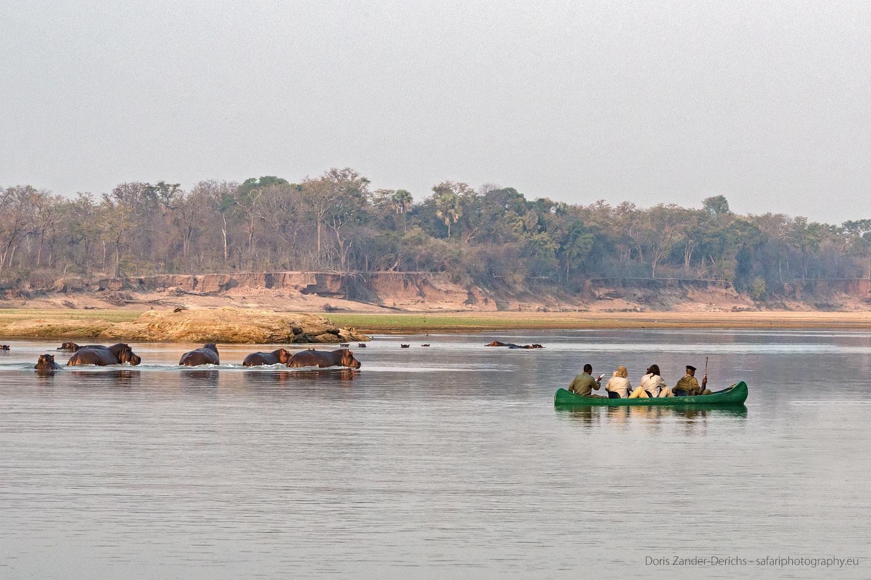 Walking Safari - Sambia