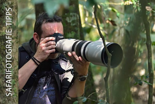 Safari Fotografie - Tipps für bessere Wildlife Fotos