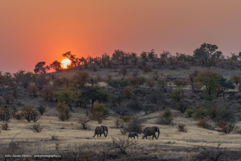 Elefanten - Mashatu Game Reserve - Botswana