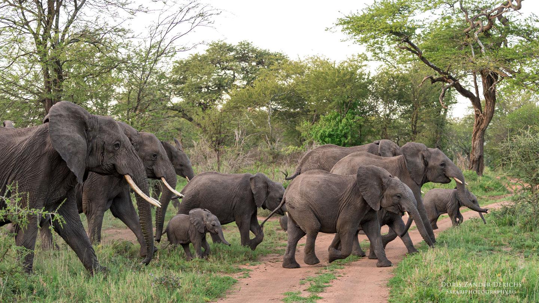 Serengeti - Tansania - Afrika