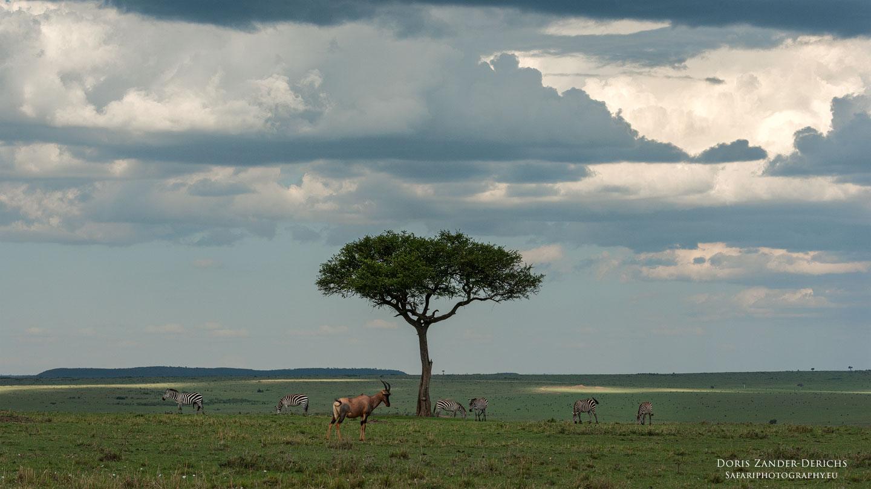 Masai Mara - Kenia - Afrika
