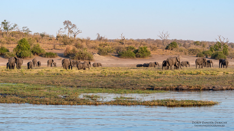 Elefanten - Chobe - Botswana